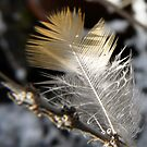 little feather by tego53