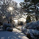 Sunburst through snowy trees - Moorhaven, South Dartmoor by moor2sea
