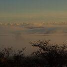 Foggy Floating Fields - South Hams, Devon by moor2sea