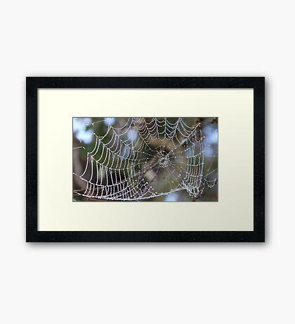 Nature's Jewels Framed Print