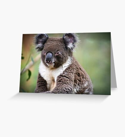 { koala } Greeting Card