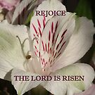 The Lord is Risen prints/cases/gifts/apparel by hummingbirds