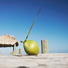 Coconut on a jetty by Roi  Brooks