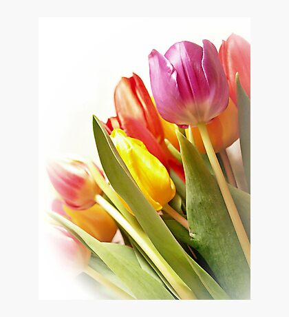 Floral Rainbow Photographic Print