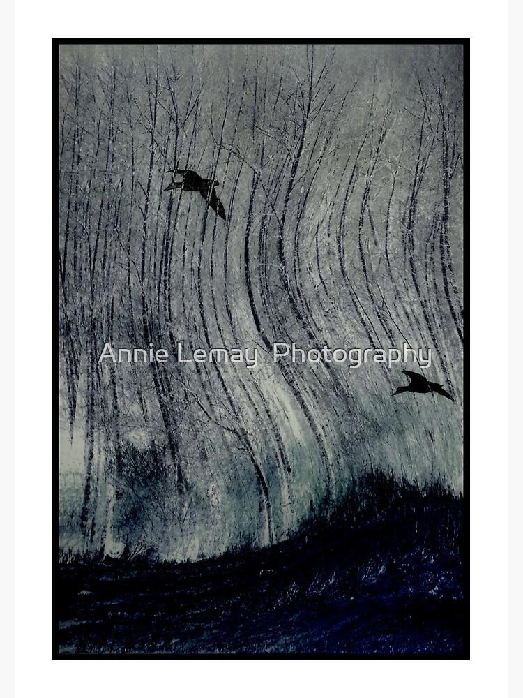 Freedom Flight by ajlphotography