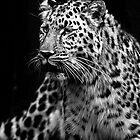 Leopard Spots. by CJTill