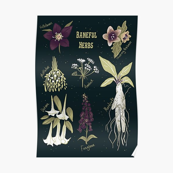 Baneful Herbs- Botany for witches  Poster