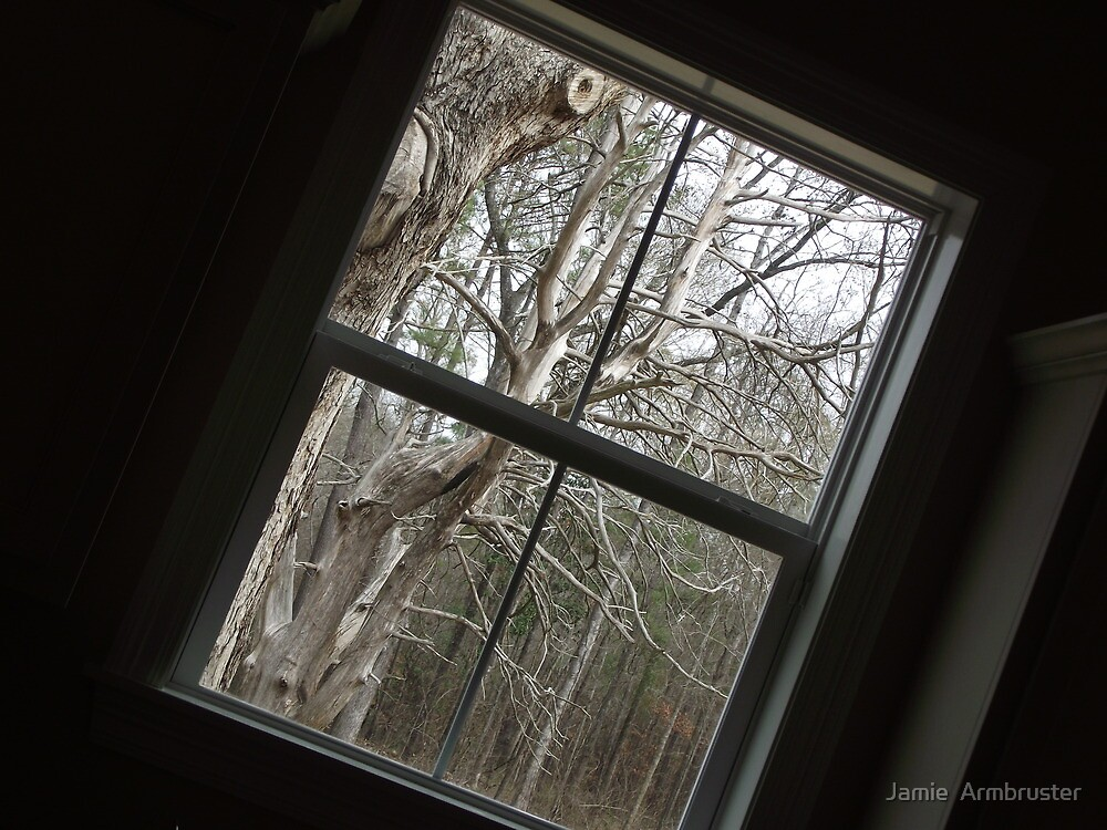 Window with a View by Jamie  Armbruster