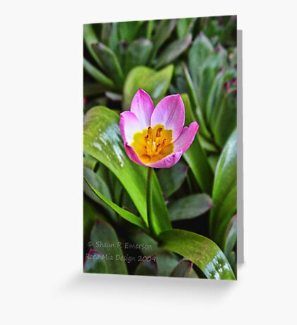 Tiny Tulip Greeting Card