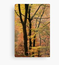 Autumn in Silent Valley Metal Print