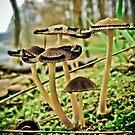 Fungilicious by NicoleBPhotos