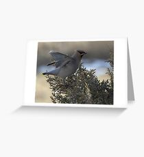 Waxwing Stretch Greeting Card