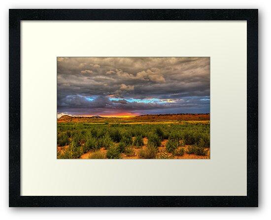Arizona Traditional by Bob Larson