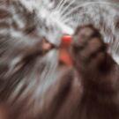 The Cat by pixel-cafe .de