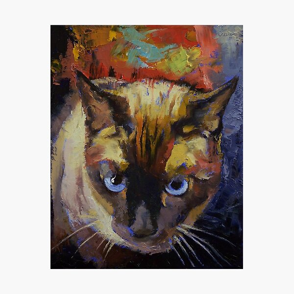 Seal Point Siamese Photographic Print