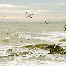 Brighton Birds I by Claire Haslope