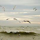Brighton Birds II by Claire Haslope