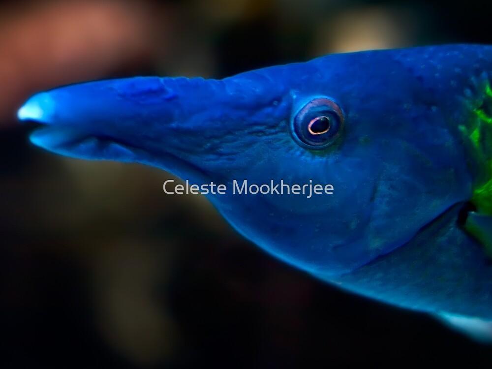 Dir das Auge geben von Celeste Mookherjee
