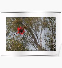 Flower MANDA Poster