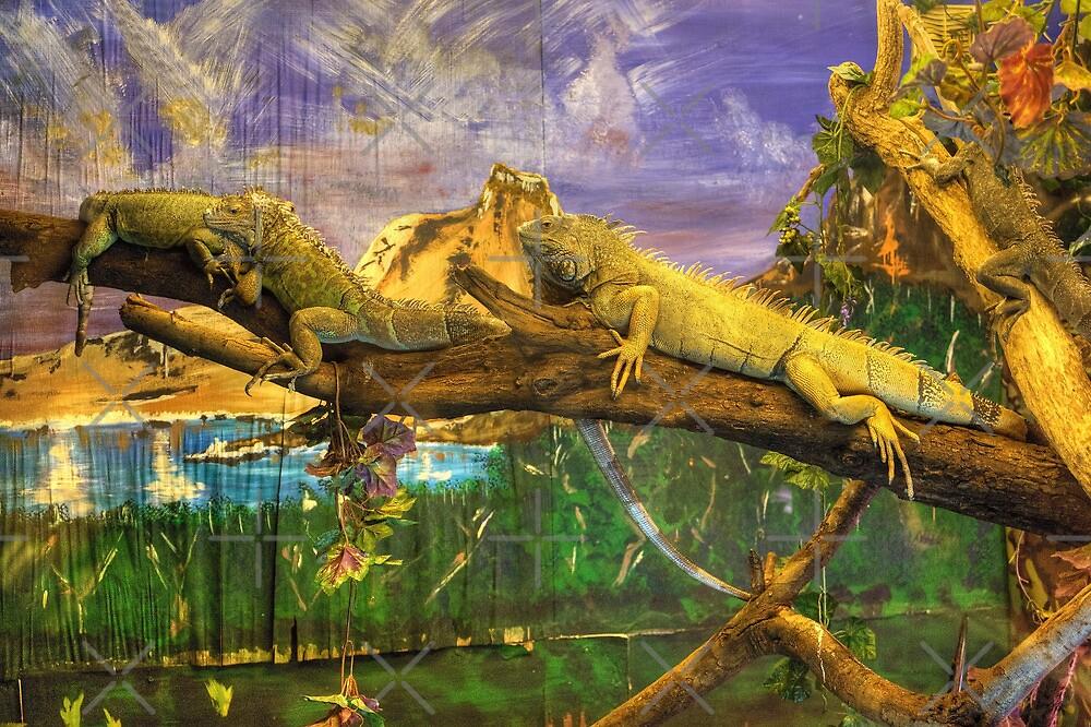 Iguana by Tom Gomez
