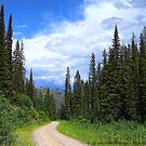 Bear Country (Big Mountain Ski Resort) by rocamiadesign