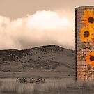 Sunflower Silo in Boulder County Colorado Sepia Color Print by Bo Insogna