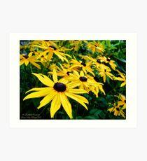 Sunshine (Black Eyed Susans) Art Print