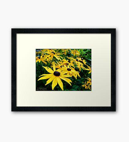 Sunshine (Black Eyed Susans) Framed Print