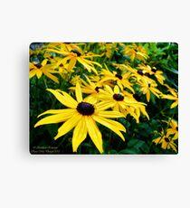 Sunshine (Black Eyed Susans) Canvas Print