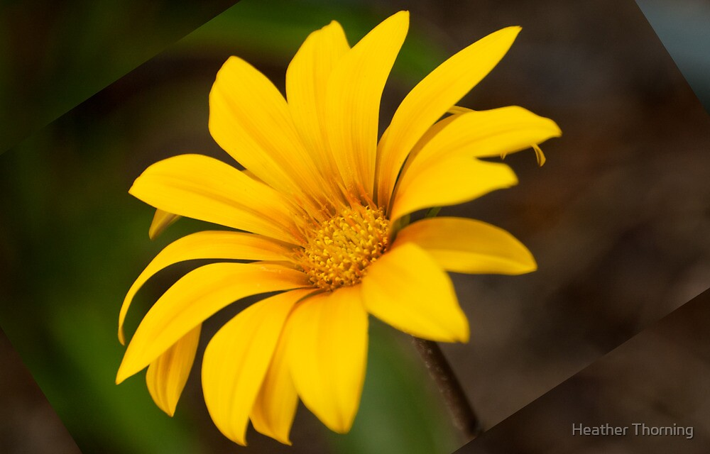 """""""Ray of Sunshine"""" by Heather Thorning"""