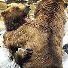 Brown Bear Conflict by Gregory Colvin