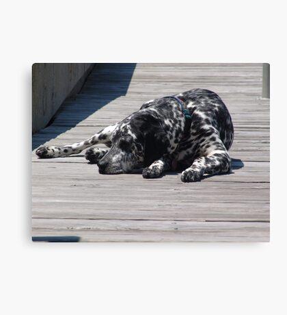 Kokomo, the Dockmaster's Dog Canvas Print