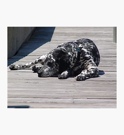 Kokomo, the Dockmaster's Dog Photographic Print