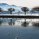 Lake Zurich by Tanya B. Schroeder
