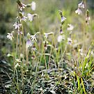 Spring Wildflowers by Jonicool