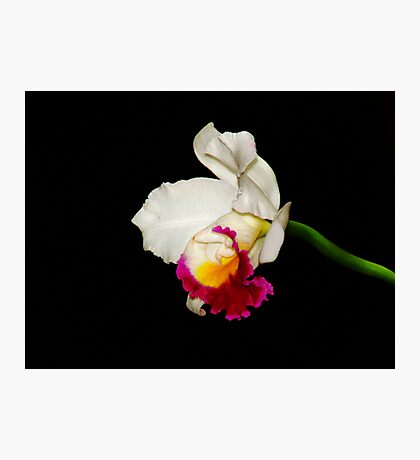 Orchid Collection - 1 Photographic Print