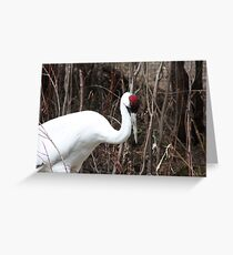 Whooping Crane Greeting Card