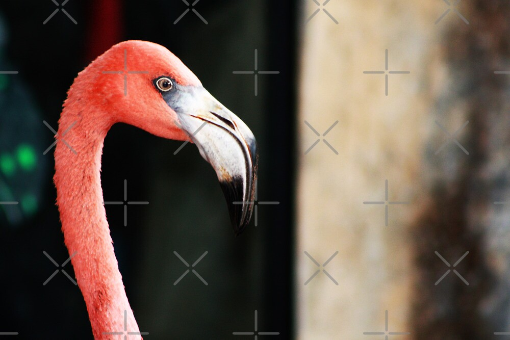 Flamingo by Alyce Taylor