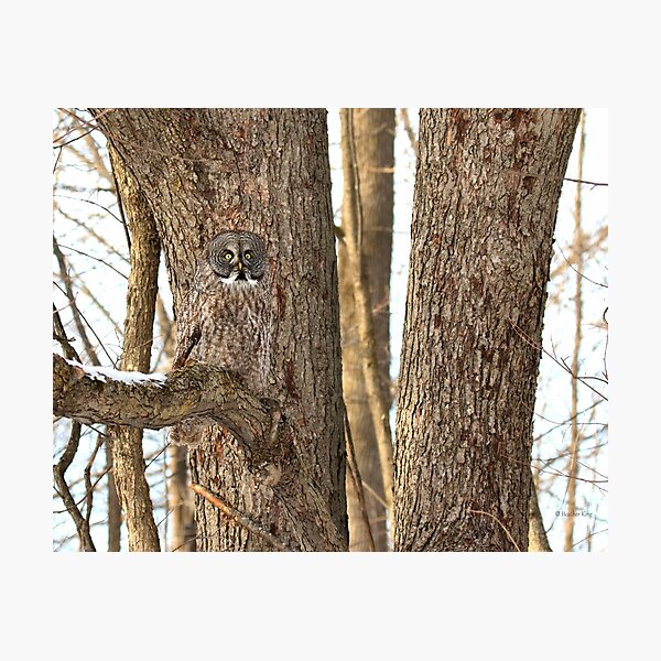 Natural Habitat Photographic Print