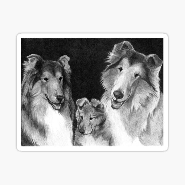 ROOKIE'S FAMILY/ rough collies Sticker