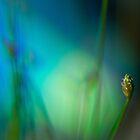 Grass Seed by BoB Davis