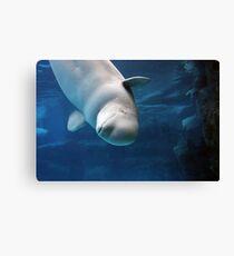 Beluga Canvas Print