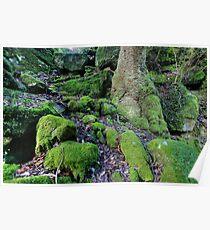 Moss Poster