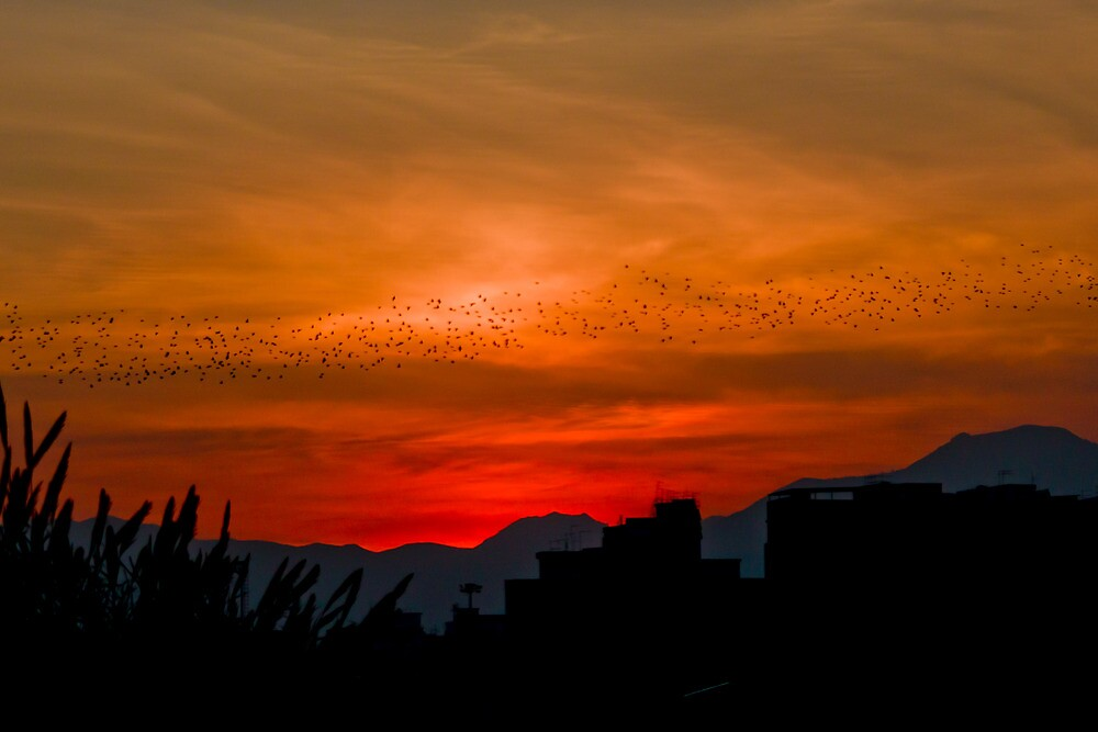 Sunset silhouette in Sicily by hawkea