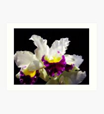 Orchid Collection - 2 Art Print