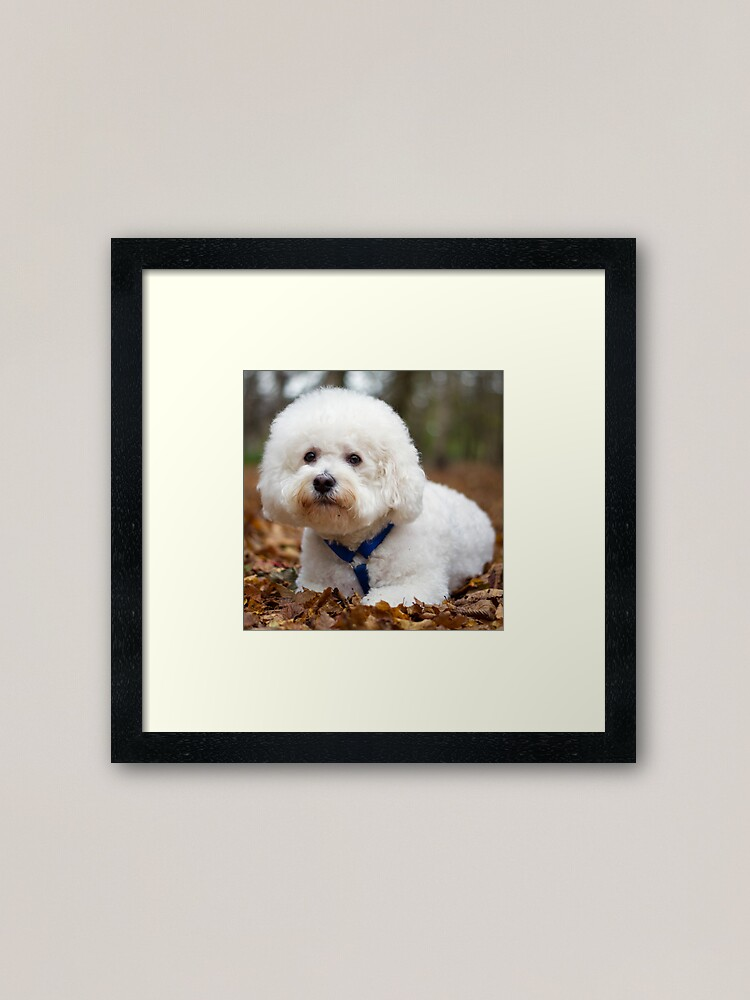 Alternate view of Bichon Frise Framed Art Print