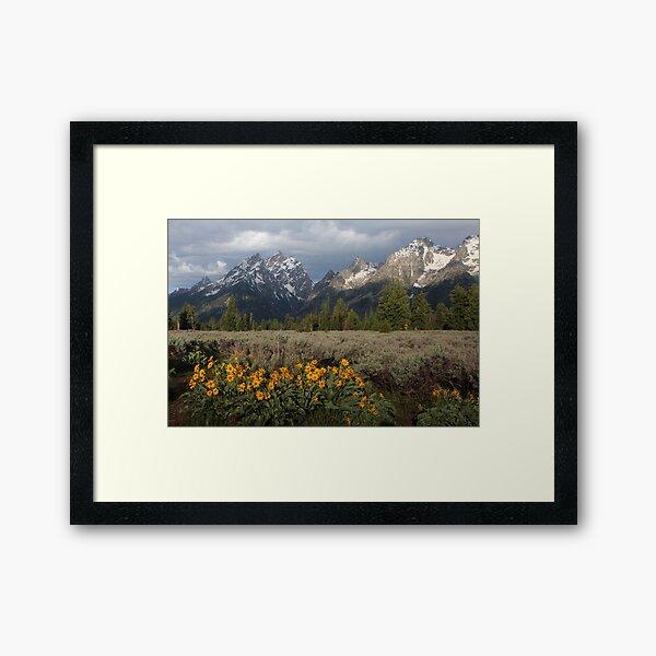 The Grand Teton & Mules Ears Framed Art Print