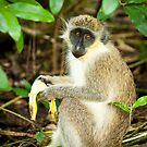 Monkey 1 by Jacinthe Brault