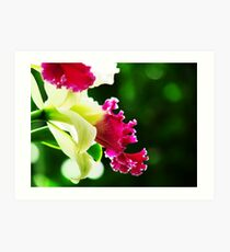 Orchid Collection - 3 Art Print