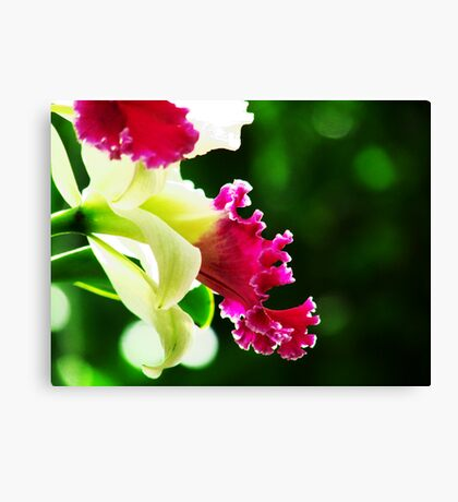 Orchid Collection - 3 Canvas Print